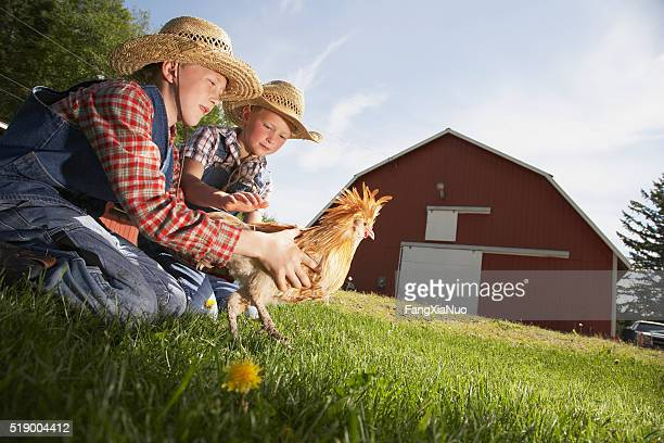 Two boys with chicken on farm