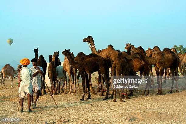 Two camel traders chat at the Pushkar fair The Pushkar Fair is the annual fiveday camel and livestock fair held in the town of Pushkar in the state...