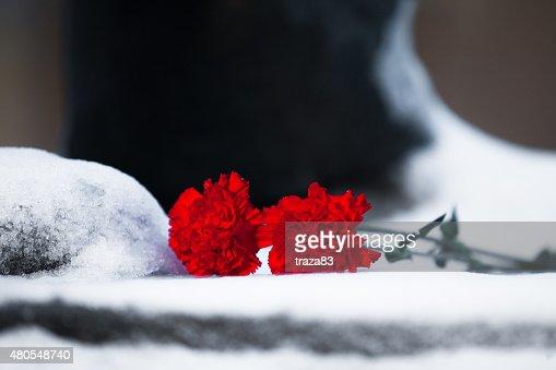 Dos flor roja en la nieve primer plano : Foto de stock