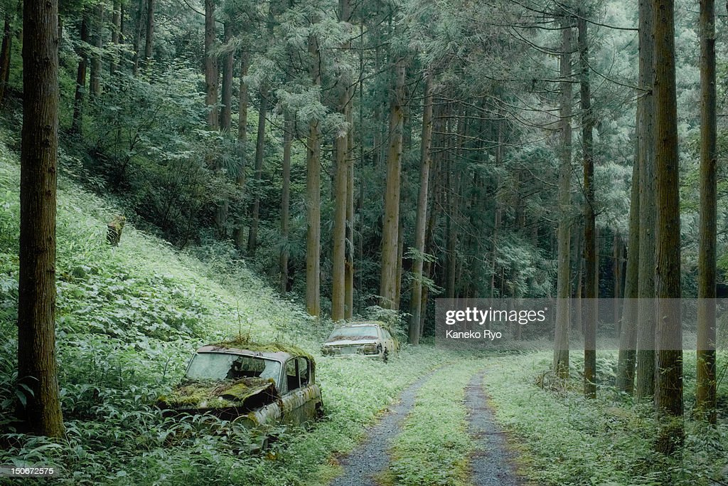 Two cars in woods