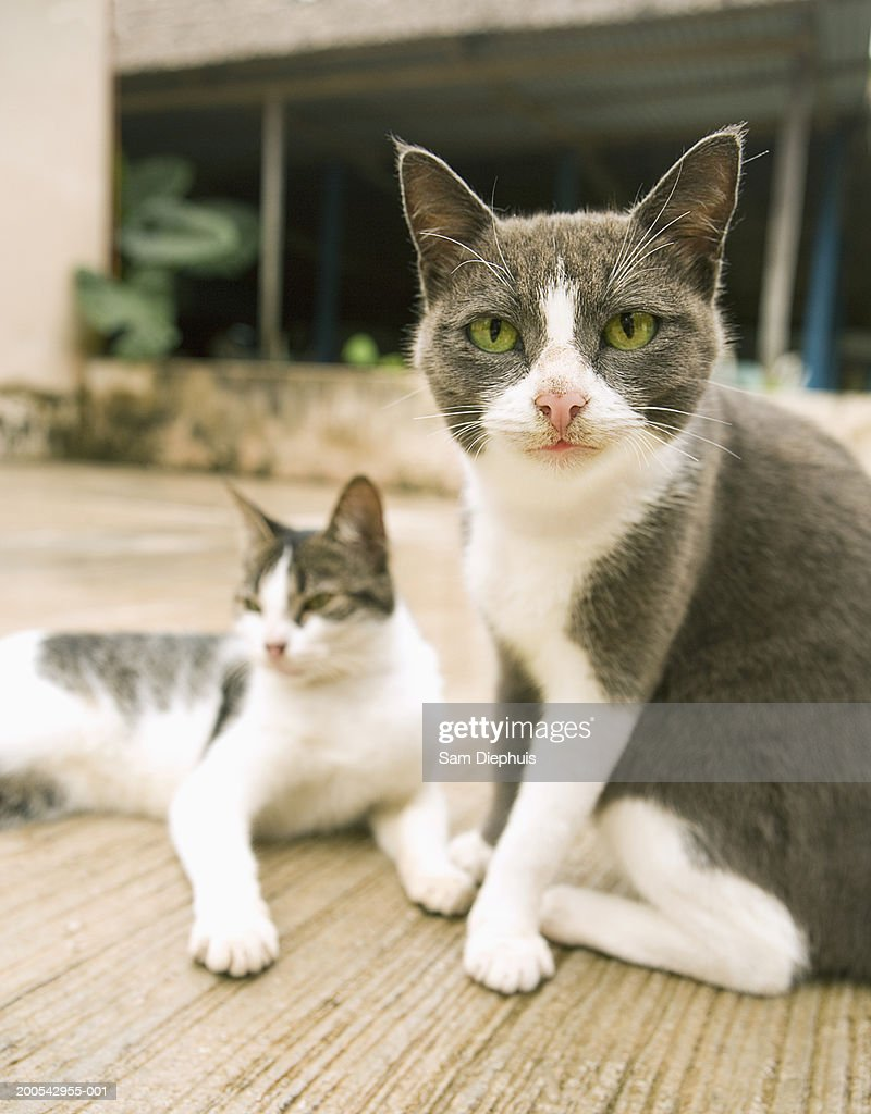 Two cats, close-up, outdoors : Stock Photo