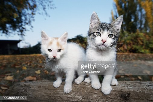 Two cats, close-up : Stock Photo