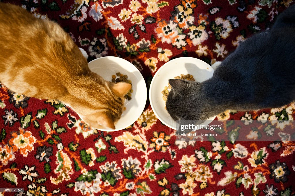 Two Cats Eating Cat Food : Stock Photo