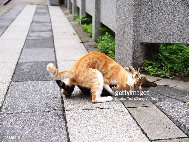 Two cats fighting on street