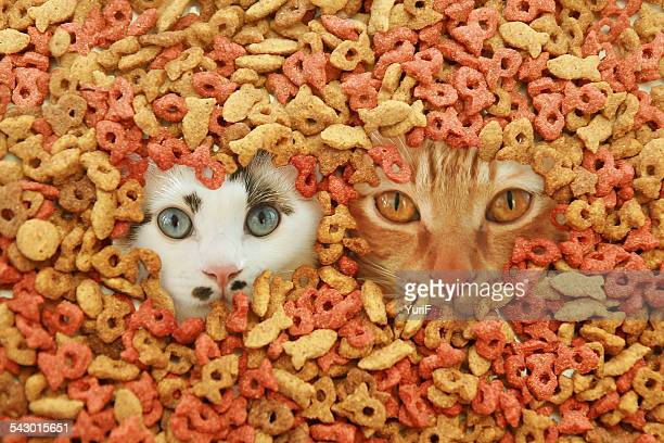 Two cats in cat food.