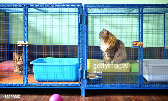 Two cats in cat shelter.