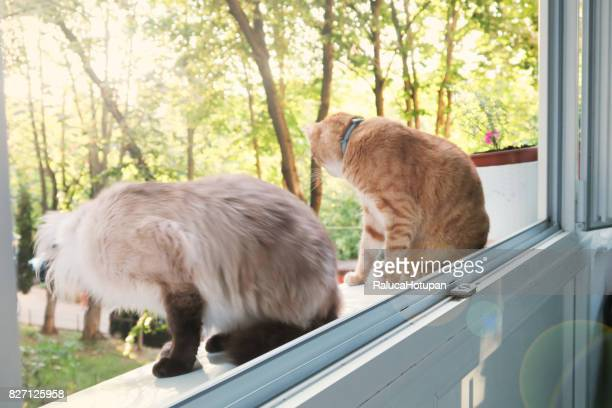 two cats on the window  watching outside from altitude