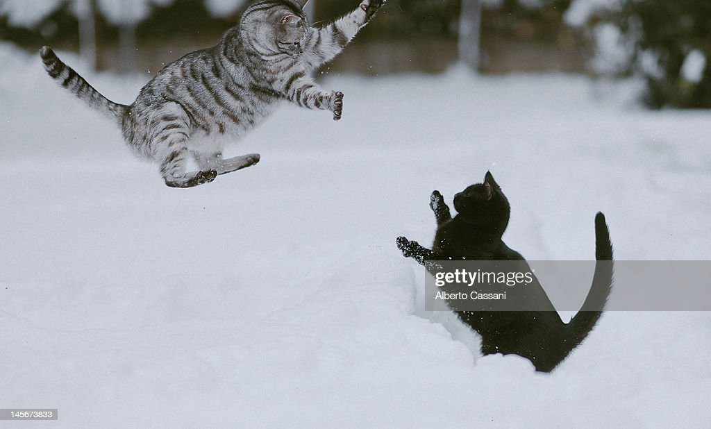Two cats : Stock Photo