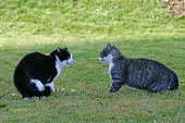 two male cats argue