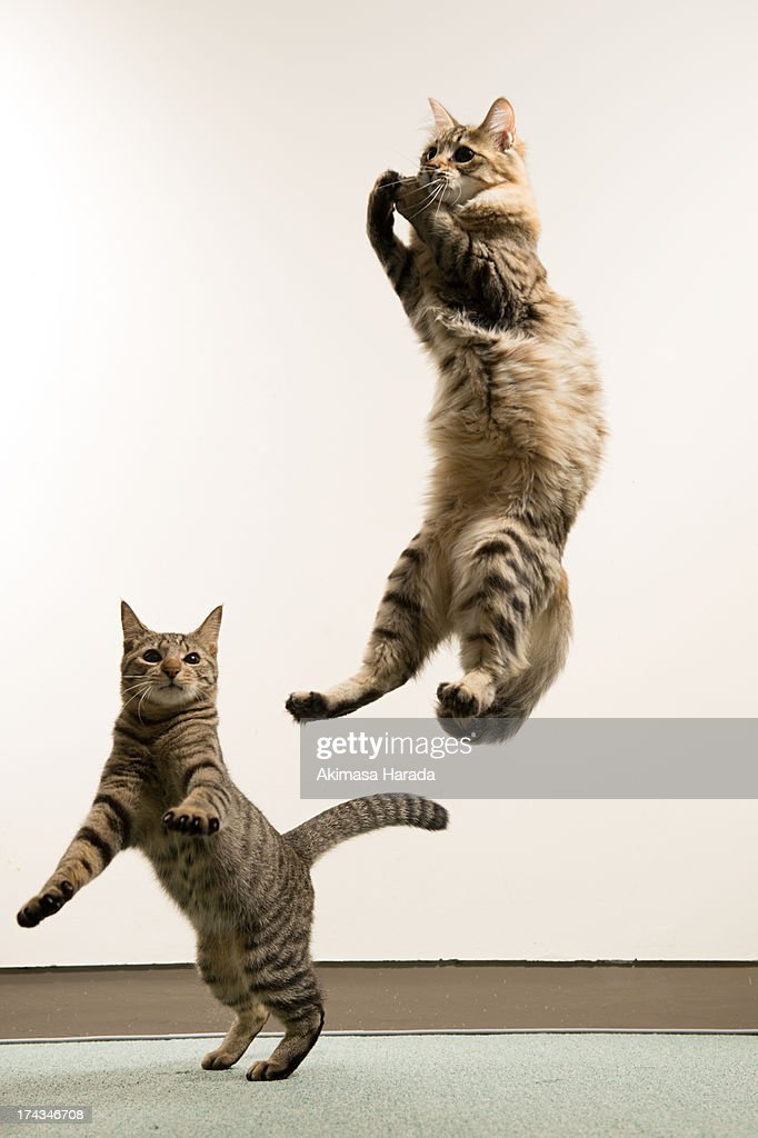Two cats playing : Stock Photo