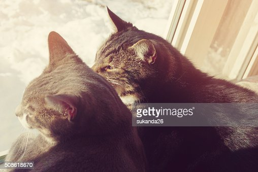 Two cats sit on window and looking outside : Stock Photo