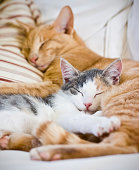Two cats sleeping together with striped pillow