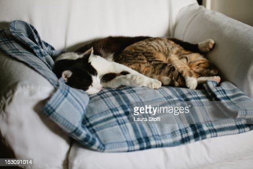 Two cats sleeping very close on checked blanket : Foto de stock