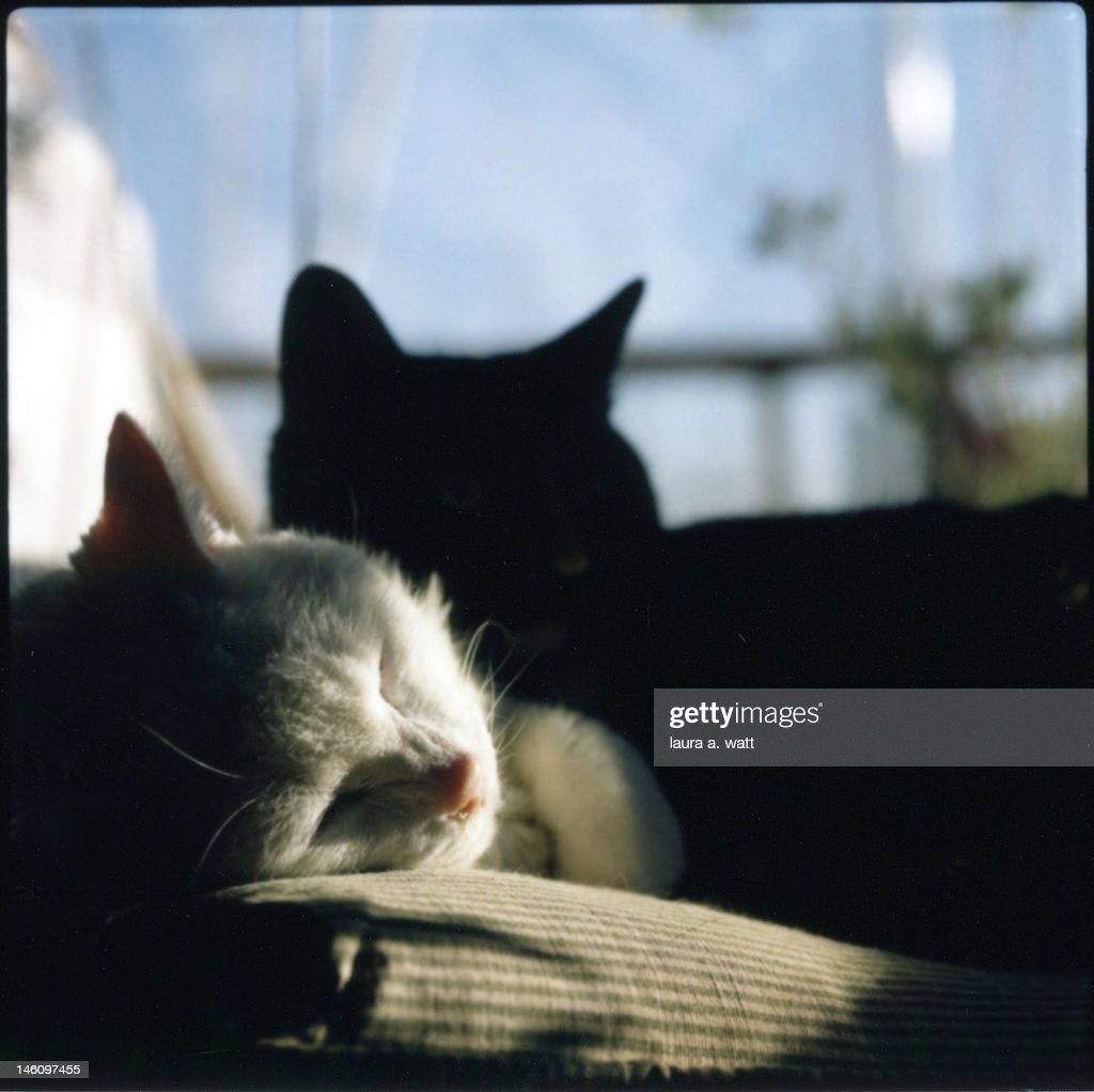 Two cats, white and dark : Stock Photo