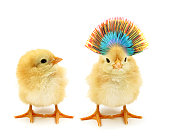 Here are two chicks. Which one is the punker?
