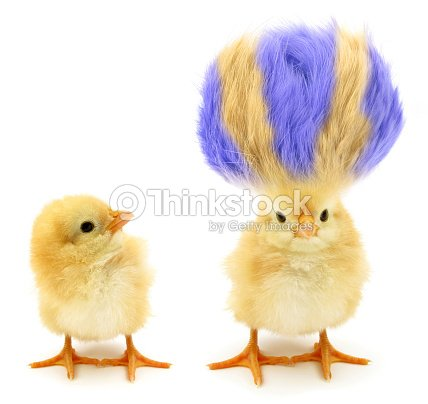 Two chicks one crazy with even crazier hair : Foto de stock