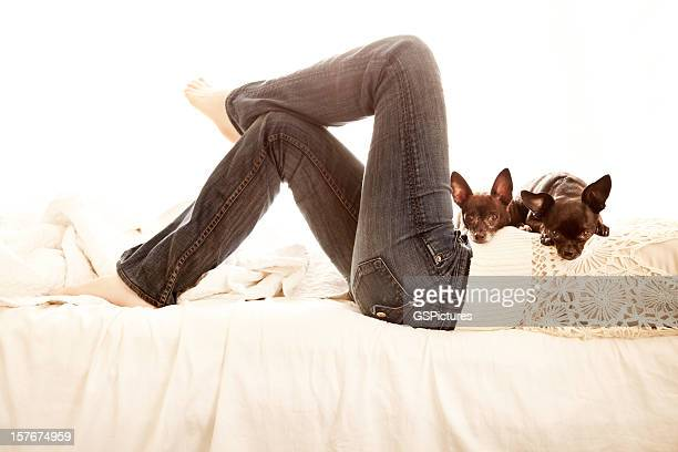Zwei chihuahua Hund ruhen auf Frau Bauch