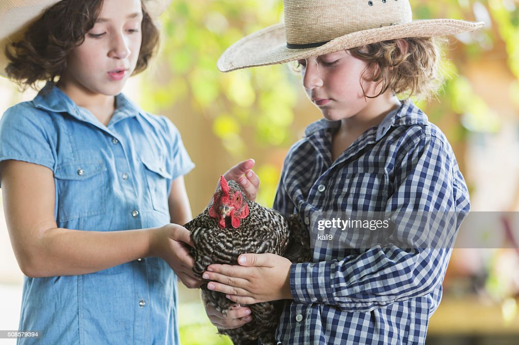 Two children on farm holding a chicken : Stock Photo