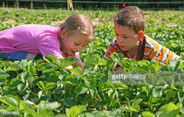 Deux enfants cueillir des fraises