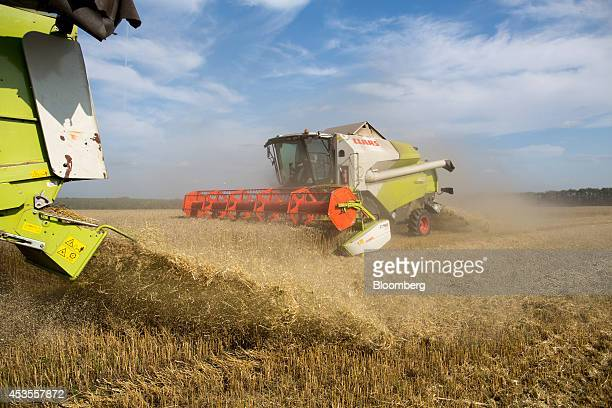 Two Class KGaA combine harvesters operate on a wheat field during the summer harvest on the OOO Barmino farm enterprise in Vargany near Nizhny...