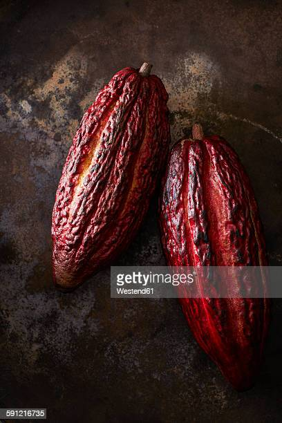 Two cocoa pods on rusty ground