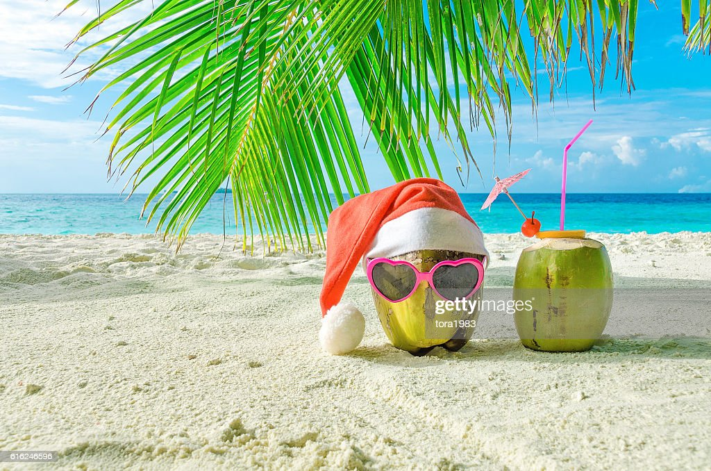Two coconut on the sand. Winter holiday in the Maldives : Foto de stock
