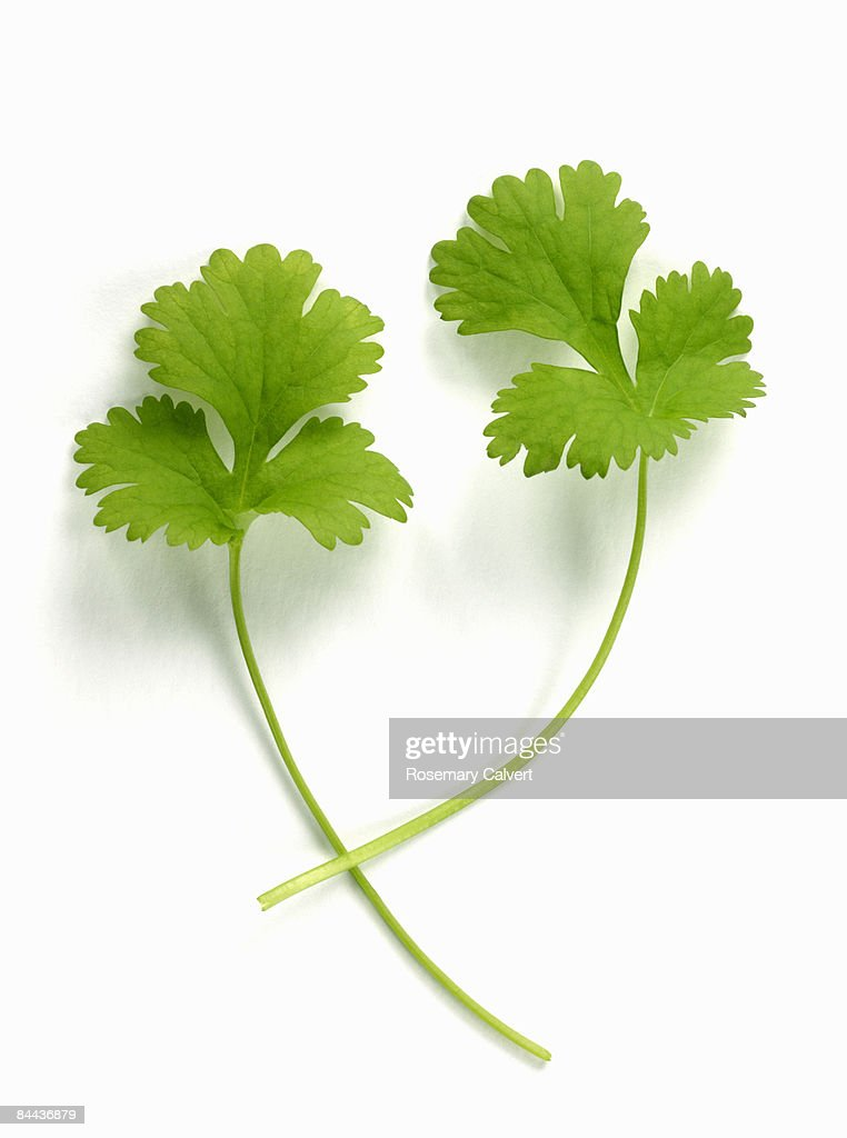 Two coriander leaves.