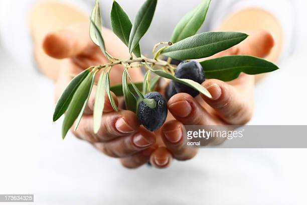 Two cupped hands offering olive branch