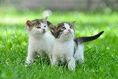 Little kitty play outside