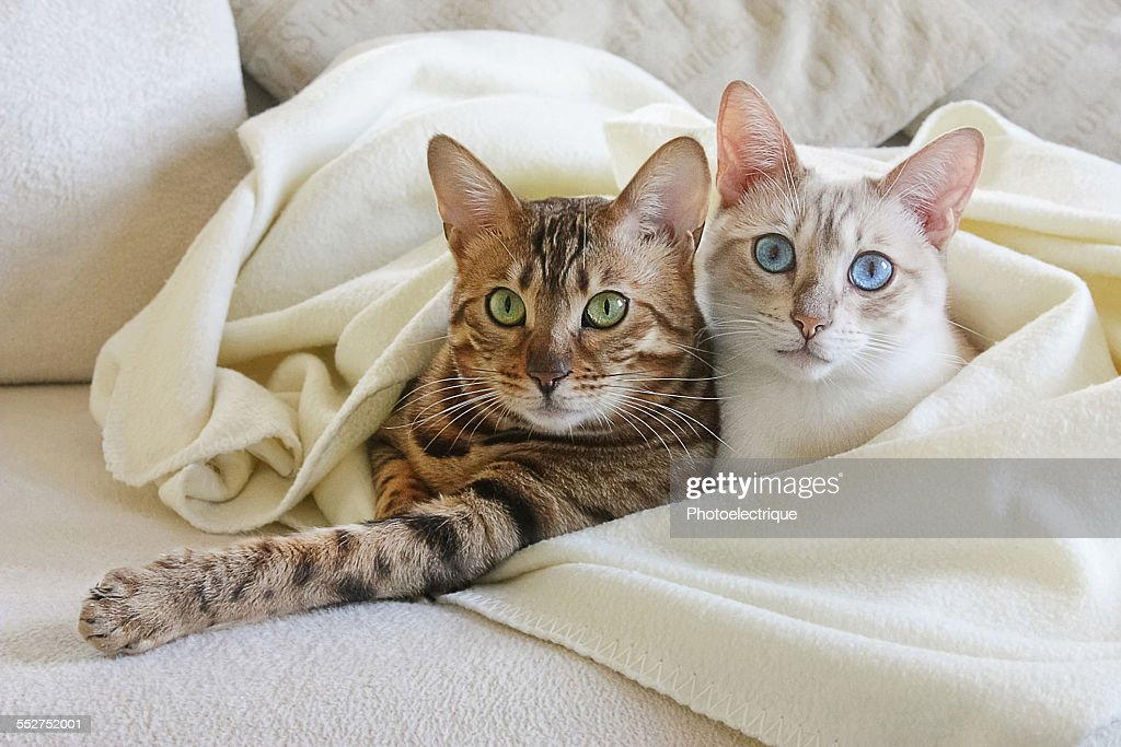 Two cute cats on the couch