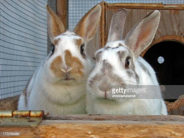 Two Cute Rabbits Sitting in Cage