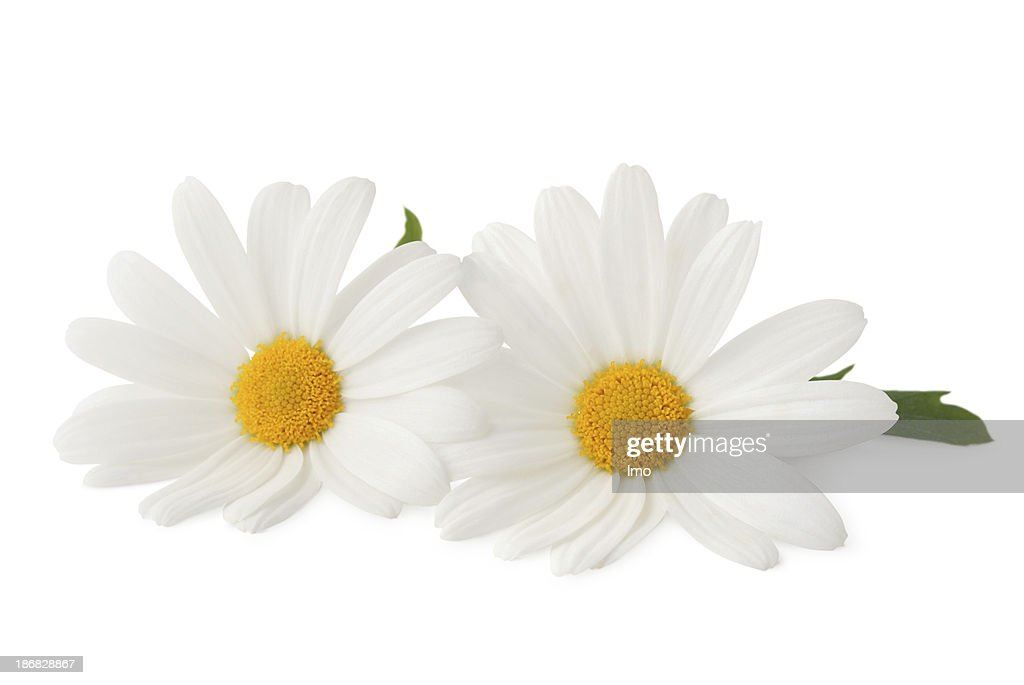 Two Daisys isolated