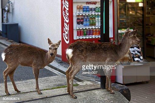 Two deer in Nara, Japan : Stockfoto