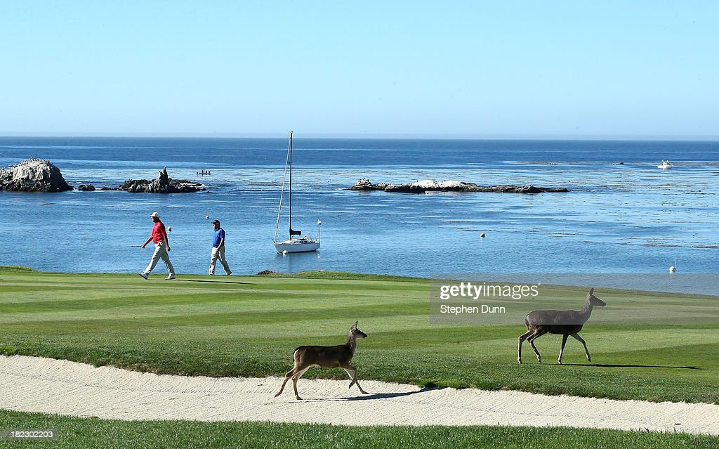 Two deer run across the fourth fairway as players walk by durng the final round of the Nature Valley First Tee Open at Pebble Beach at Pebble Beach Golf Links on September 29, 2013 in Pebble Beach, California.