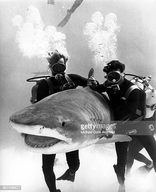 Two divers control a shark in a scene from the movie 'Thunderball' circa 1965