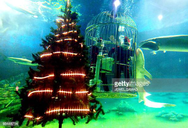 Two divers in Santa Claus outfits feed sharks inside a giant aquarium at a sea life amusement park in Jakarta 18 December 2005 as part of upcoming...