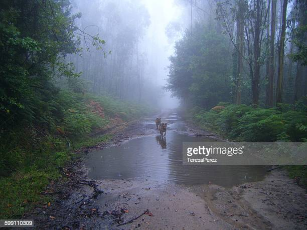 Two dogs, a puddle and fog