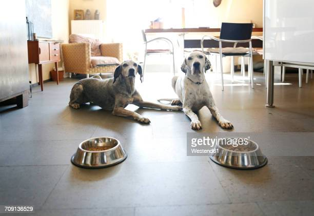 Two dogs at home lying beside bowls