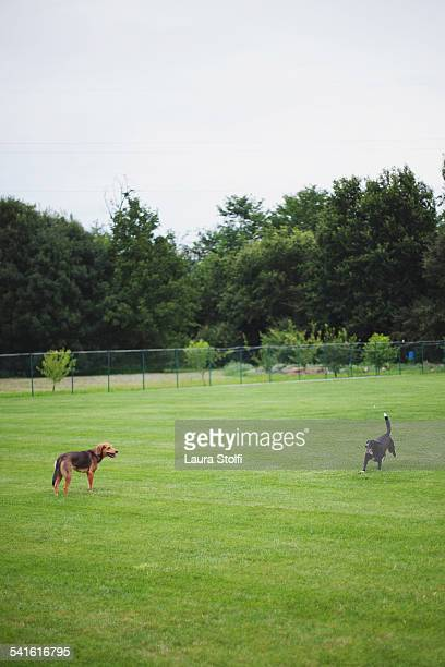 Two dogs having fun in park