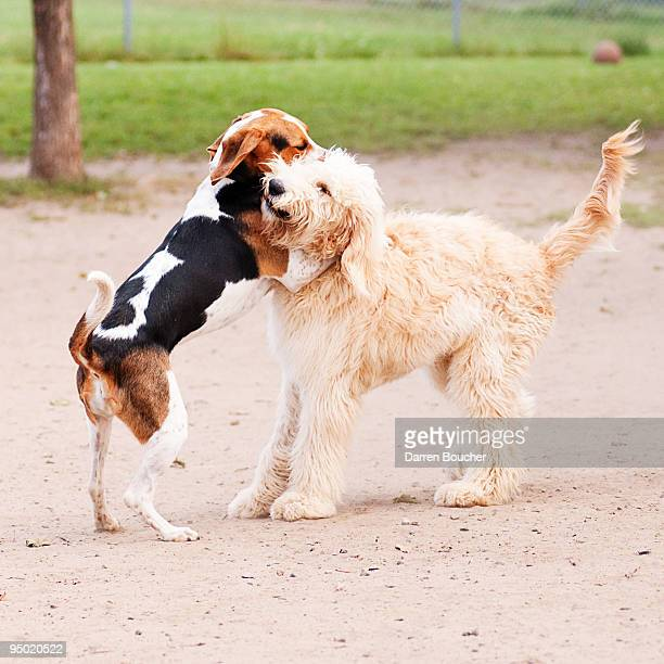 Two dogs lock in an embrace