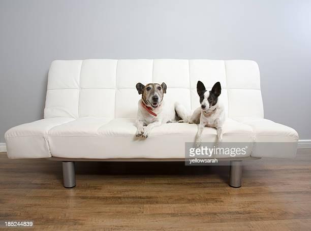 2 つの犬のラウンジ