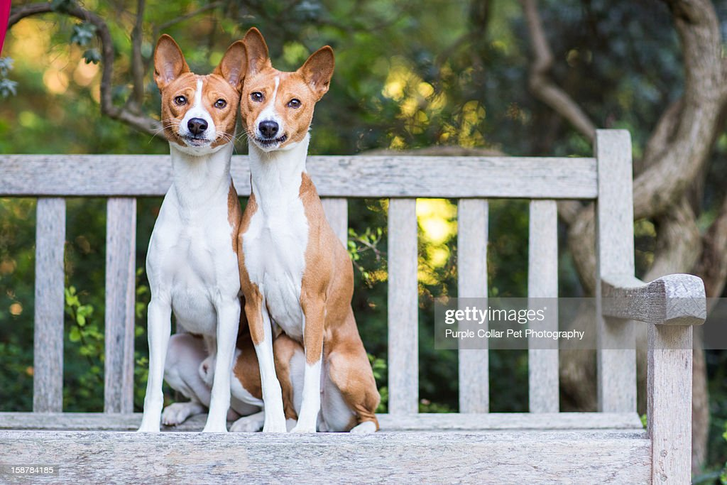 Two Dogs on Bench : Stock Photo