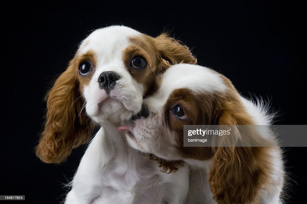 two dogs : Stock Photo