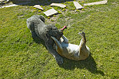 Two dogs playing in yard