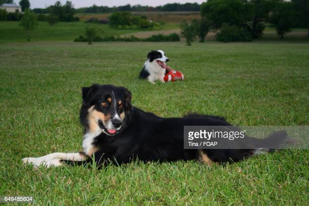 Two dogs relaxing on grass
