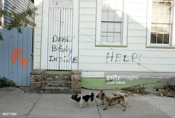 dead body animal imagens e fotografias de stock getty images