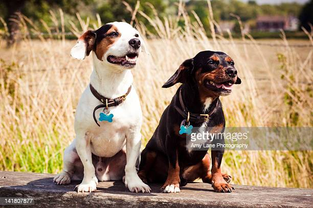 Two dogs sitting on bench