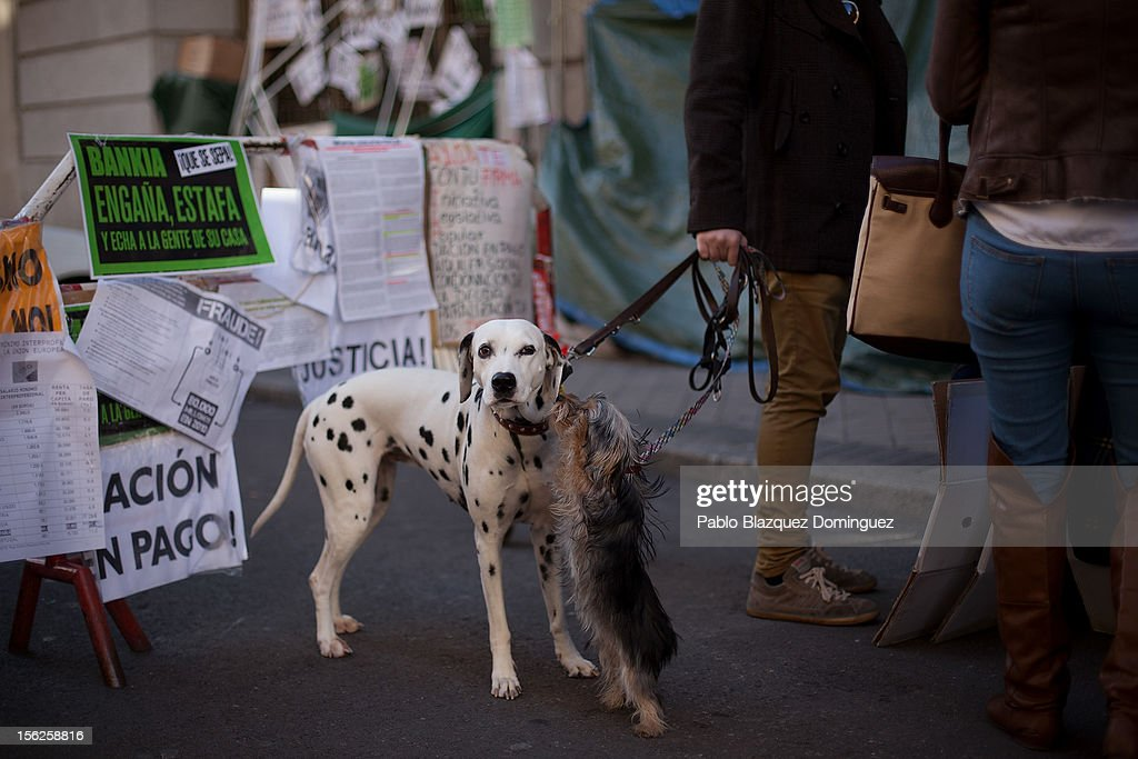 Two dogs wait while their owner signs the Mortgage Victim Platform (PAH) petition outside Caja Madrid main office on November 12, 2012 in Madrid, Spain. Spain's banks announced today that for the next two years they will suspend mortgage-related evictions of the most vulnerable people. The Spanish Banking Association (AEB) reacted three days after a woman in Barakaldo took her life just before she was due to be evicted from her home. A male homeowner facing eviction in Grenada committed suicide fifteen days earlier. There have been around 350,000 house evictions since Spain's property market crashed in 2008. The Platform for Mortgage Victims organisation has been preventing some evictions by blocking access to houses under threat of repossession.