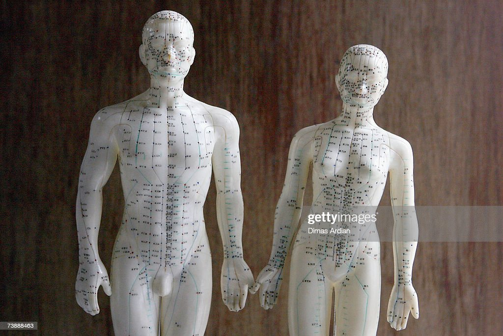 Two dolls showing the points on the body that can be treated with apitherapy are seen at Cibubur Bee Center on April 15, 2007 in Jakarta, Indonesia. Bee acupuncture or apitherapy, is an alternative healing practice where bee stings are used as treatment for various conditions and diseases. Apitherapy, which was first practiced in China, has developed as a popular alternative healing method in Indonesia.