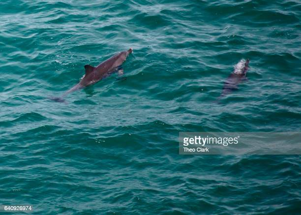 Two dolphins swimming in ocean
